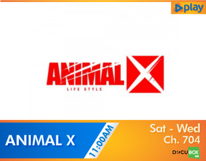 Animal X on PLAY